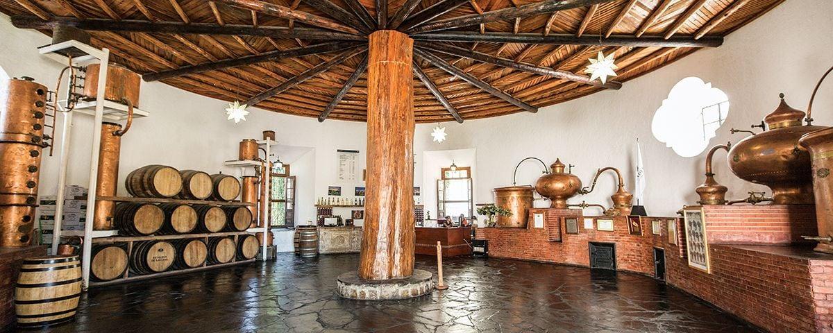 8 viñedos para probar los mejores vinos de México