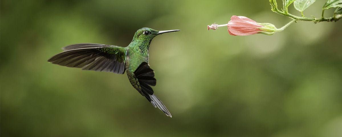 La leyenda maya del colibrí