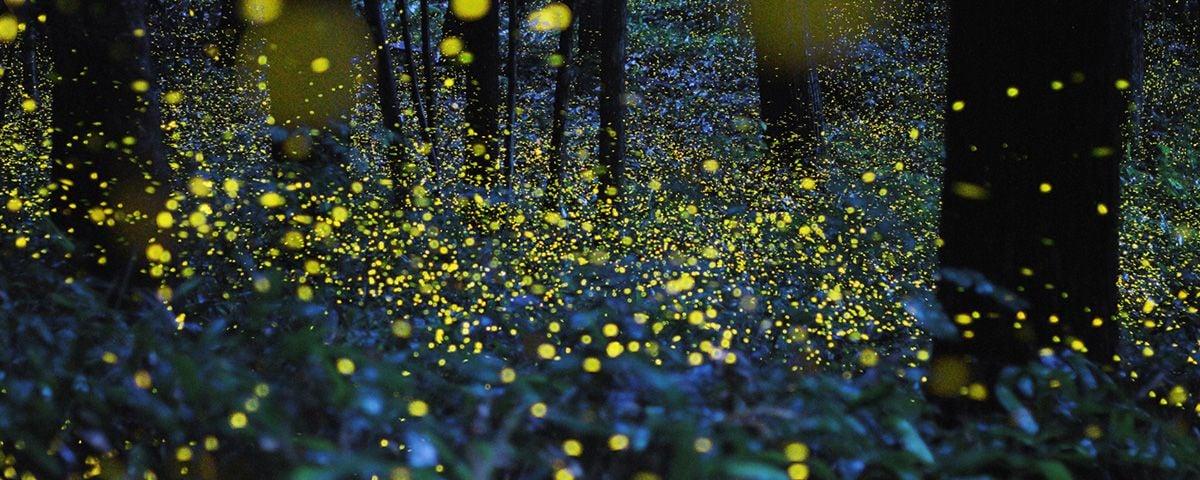 Descubre nanacamilpa el santuario de las luci rnagas en for Espectaculo de luciernagas en tlaxcala