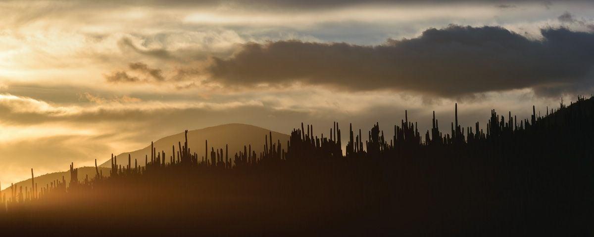 Valle de Tehuacán-Cuicatlán, Patrimonio Natural de la Humanidad