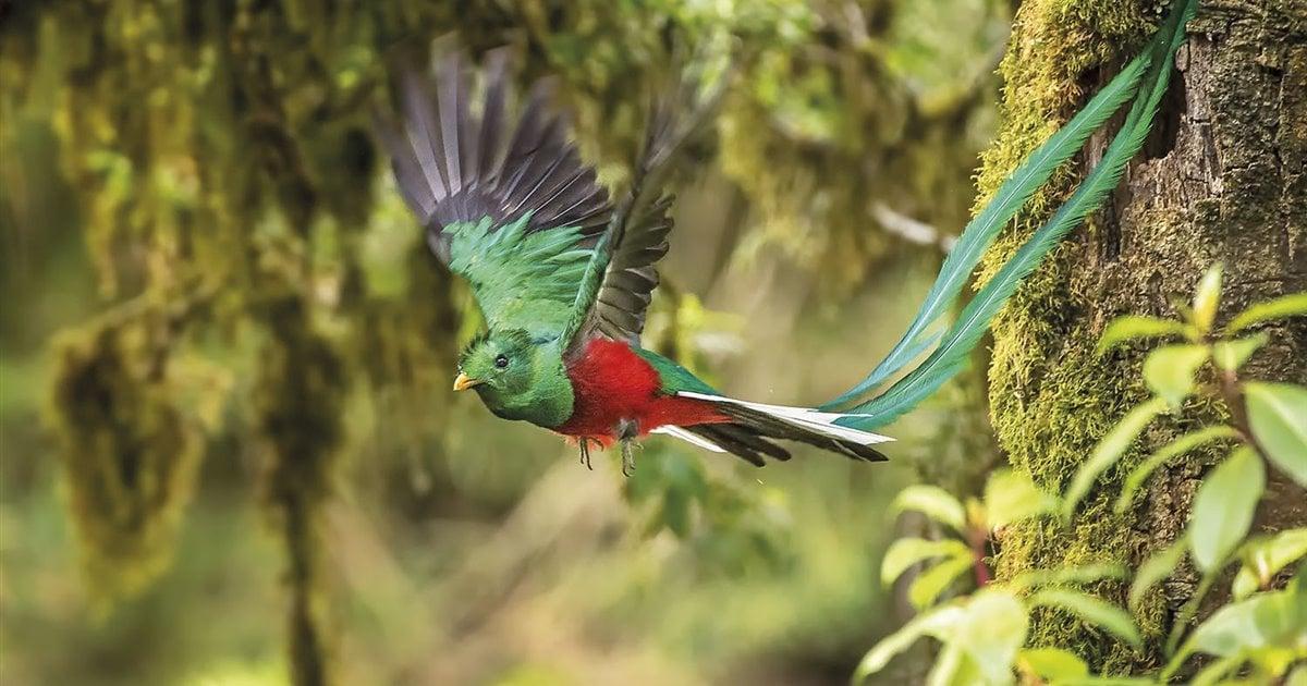 El quetzal, el ave sagrada de México