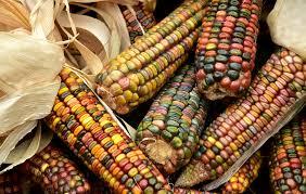 Las 64 razas de maíz en México